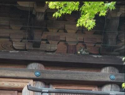 三重塔の猫1